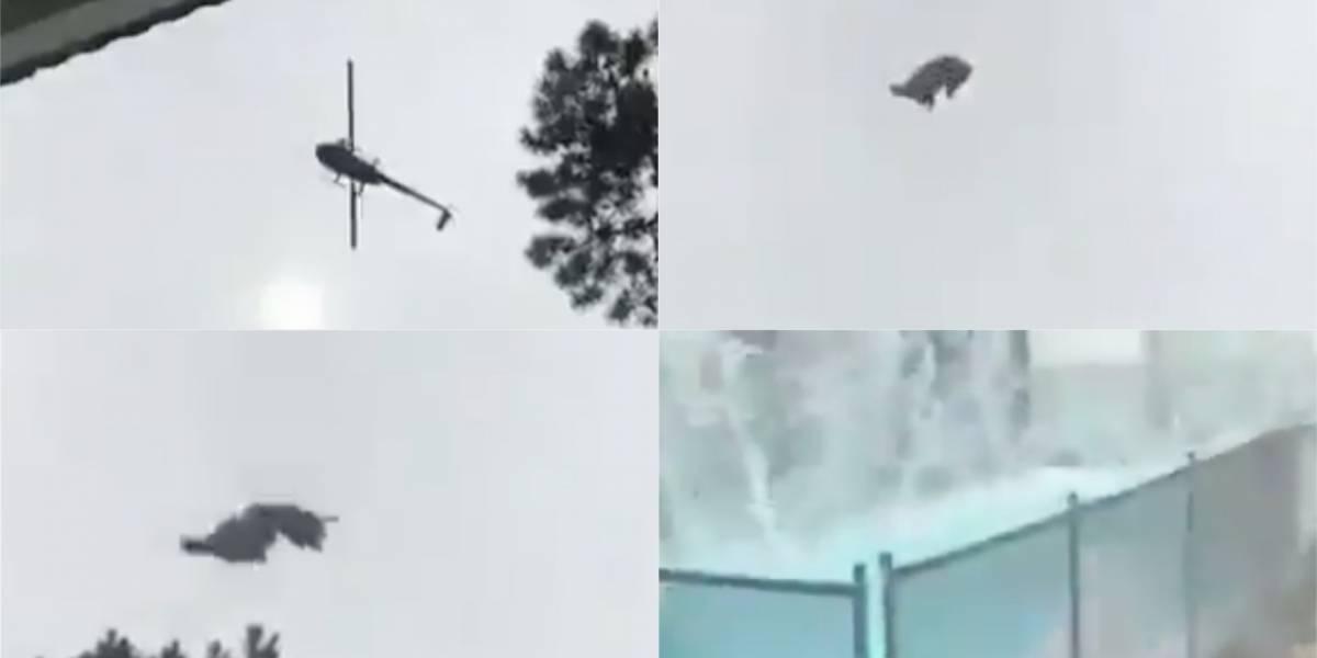 """""""Lo retiraron, lo asaron y lo comieron"""": Cerdo que tiraron desde un helicóptero a una piscina terminó en la parrilla"""