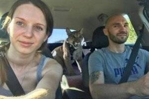 Puma tem vida de gato após casal resgatá-lo de zoológico e faz sucesso no Instagram