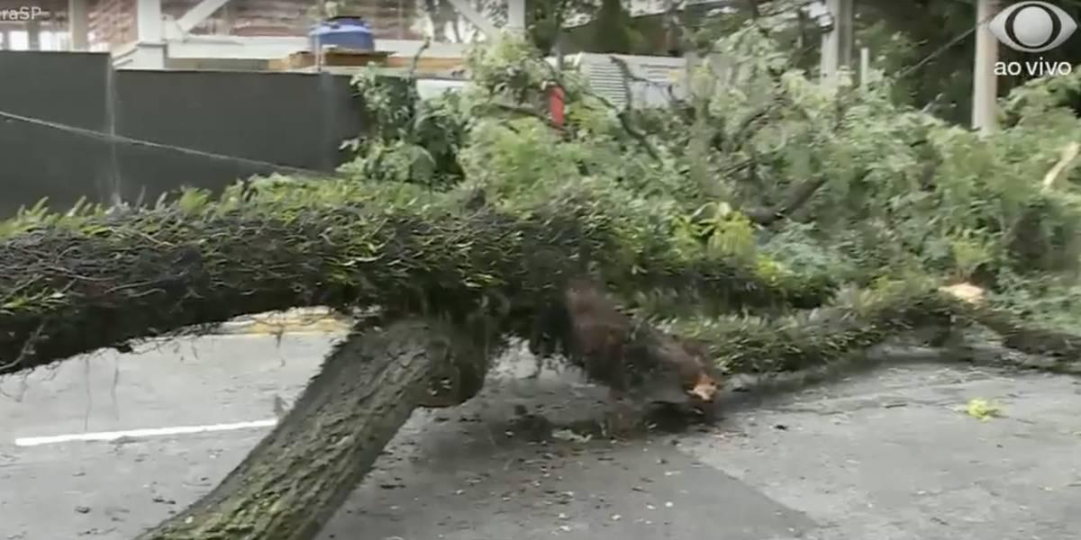 São Paulo amanhece com 23 árvores caídas e 3 desabamentos após fortes chuvas