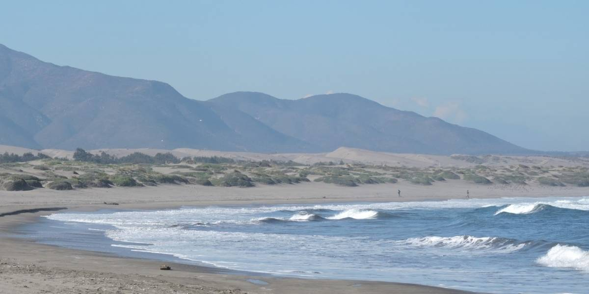 Animales marinos aparecen muertos en la costa de la comuna de Concón