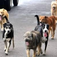 Los perros entienden a los humanos aún cuando no han sido entrenados. Noticias en tiempo real