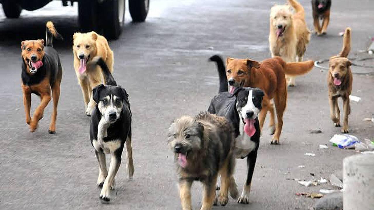 Los perros entienden a los humanos aún cuando no han sido entrenados