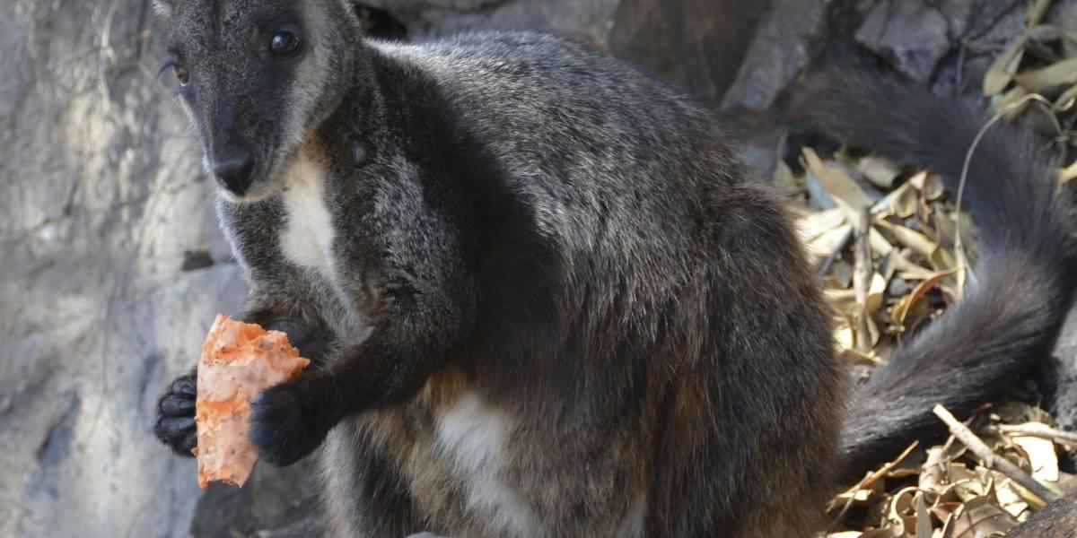 Pese a fuego en Australia podrían haber sobrevivido especies