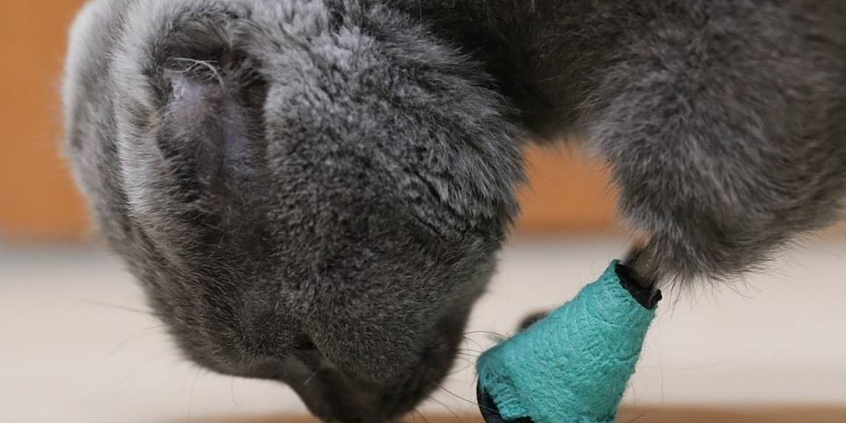 Gata recibe nueva oportunidad de vida gracias a la impresión 3D