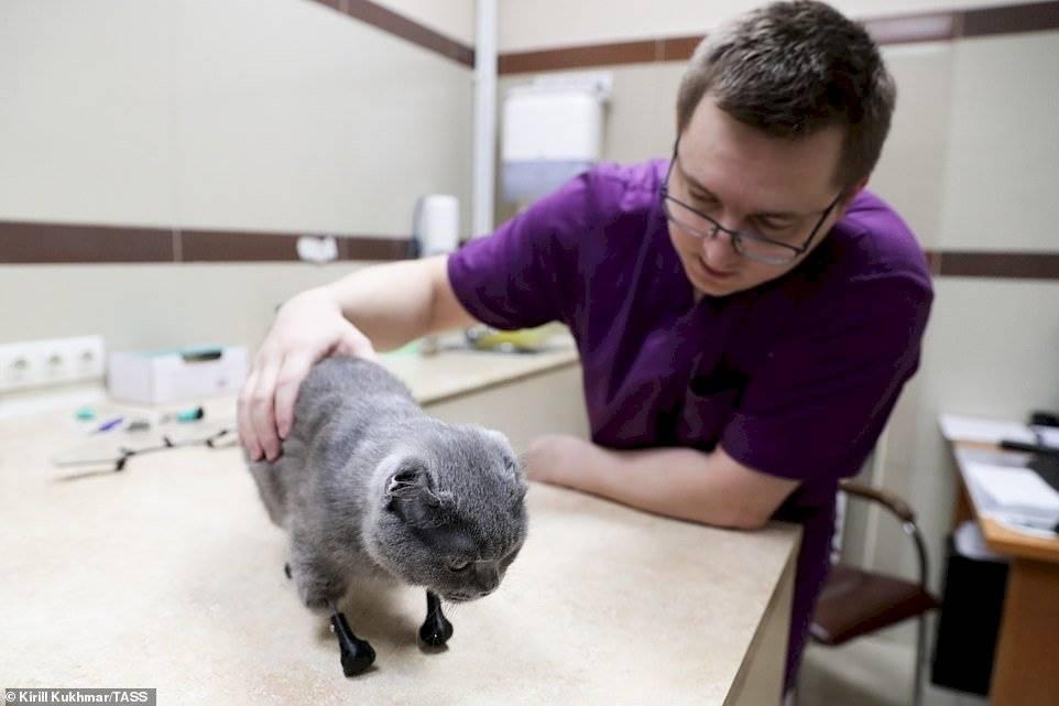 Gata recibe nueva oportunidad de vida gracias a la impresión 3D luego de perder sus cuatro patas