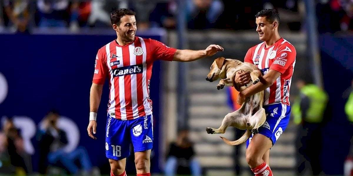 Atlético de San Luis pide ayuda para encontrar a 'Tunita', la perrita que invadió la cancha