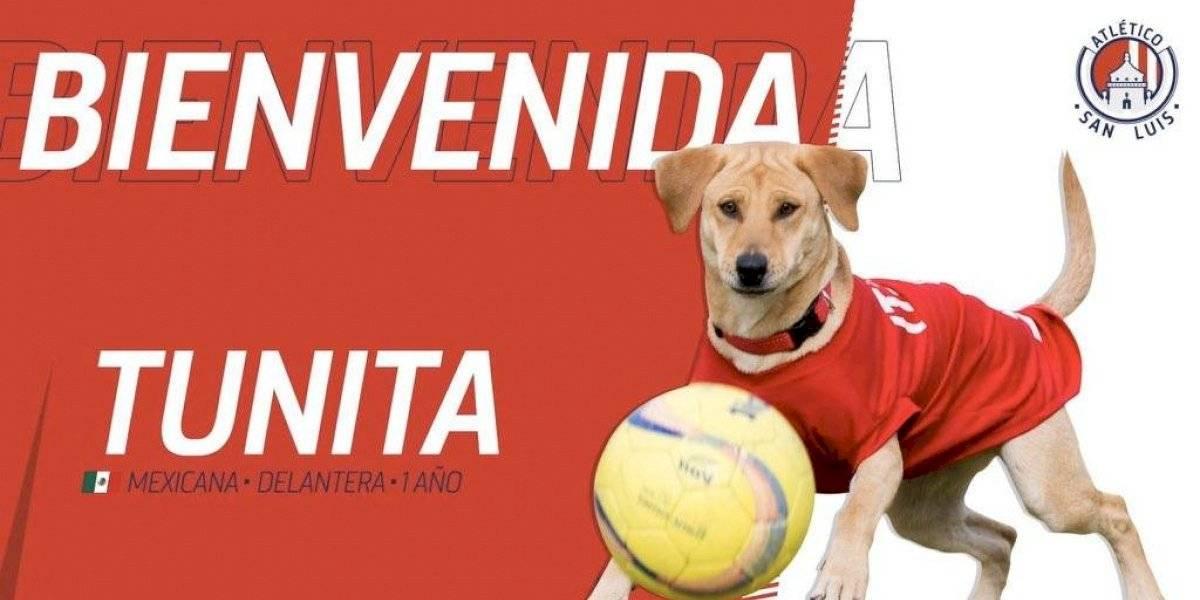 Atlético de San Luis ya encontró a la perrita 'Tunita'