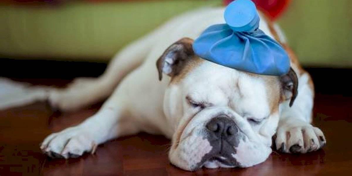Enfermedades que pueden adquirir tus mascotas por temporada de lluvia