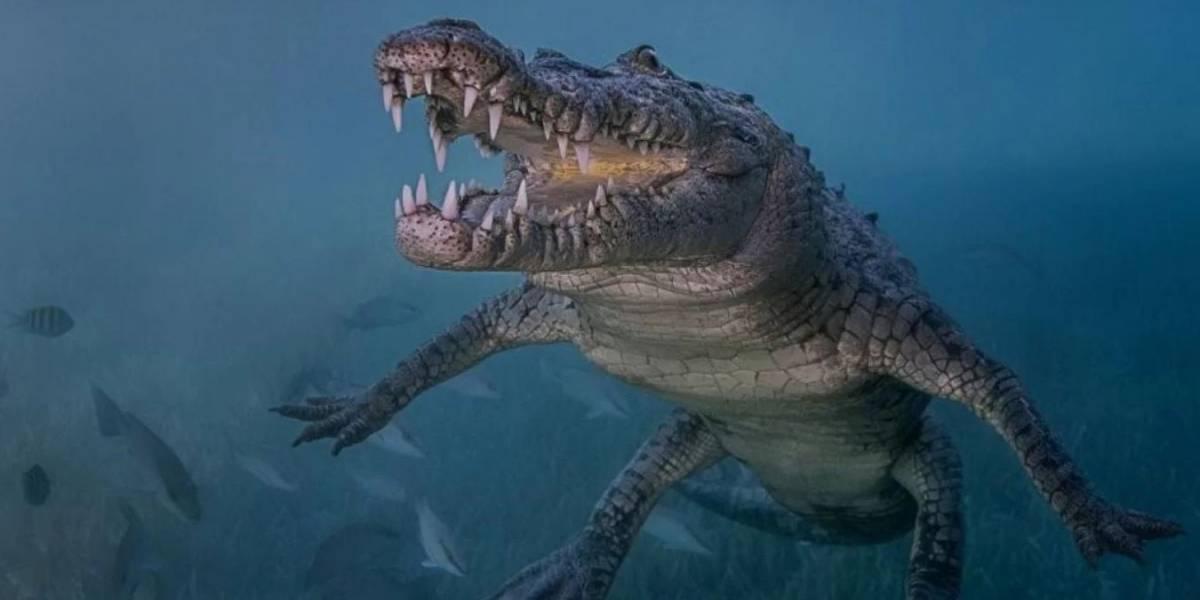 Los cocodrilos prehistóricos fueron de sangre caliente para sobrevivir al jurásico frío, relevó un nuevo estudio