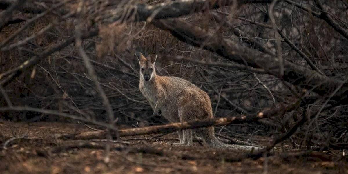 Incendios en Australia revelaron un secreto de miles de años