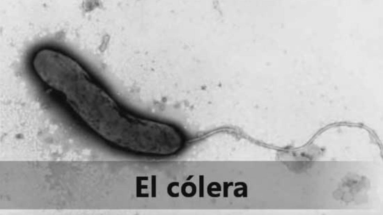 Coronavirus: conoce otras pandemias que han afectado a la humanidad en su historia
