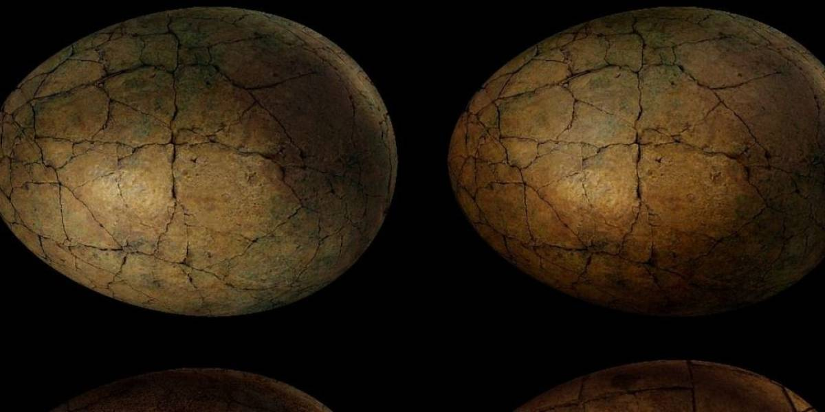 Un huevo de dinosaurio con un embrión de hace 65 millones de años fue puesto en venta por 12.500 dólares