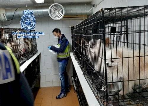 Rescatados 270 perros de dos criaderos ilegales desmantelados en Meco y Arganda