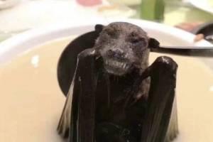 Sopa de murciélago posible origen del brote de coronavirus en China