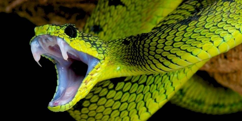 serpiente coronavirus