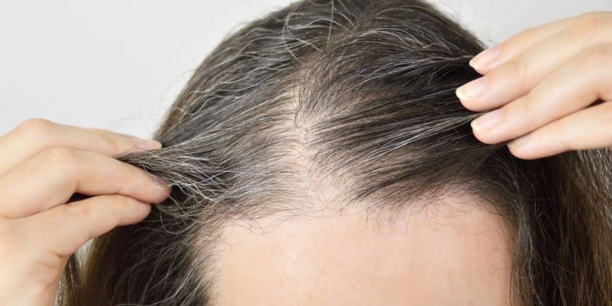 Use caroço de abacate para disfarçar os fios brancos e não ter cabelo grisalho