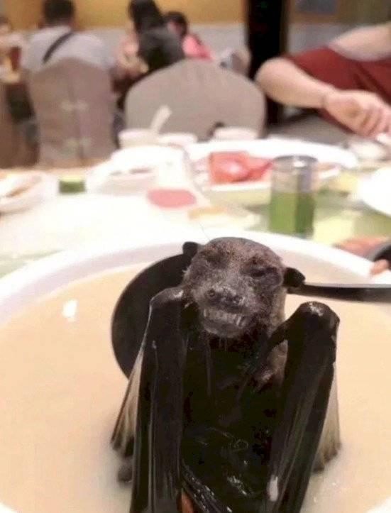 sopa de murciélago