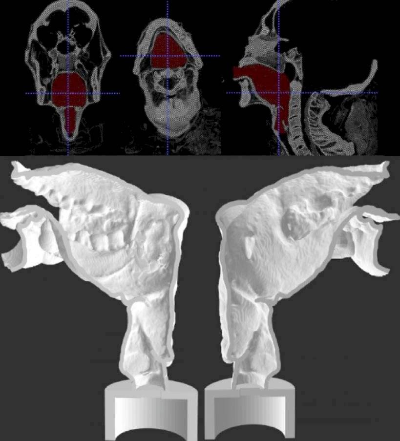 laringe electrónica en 3-D