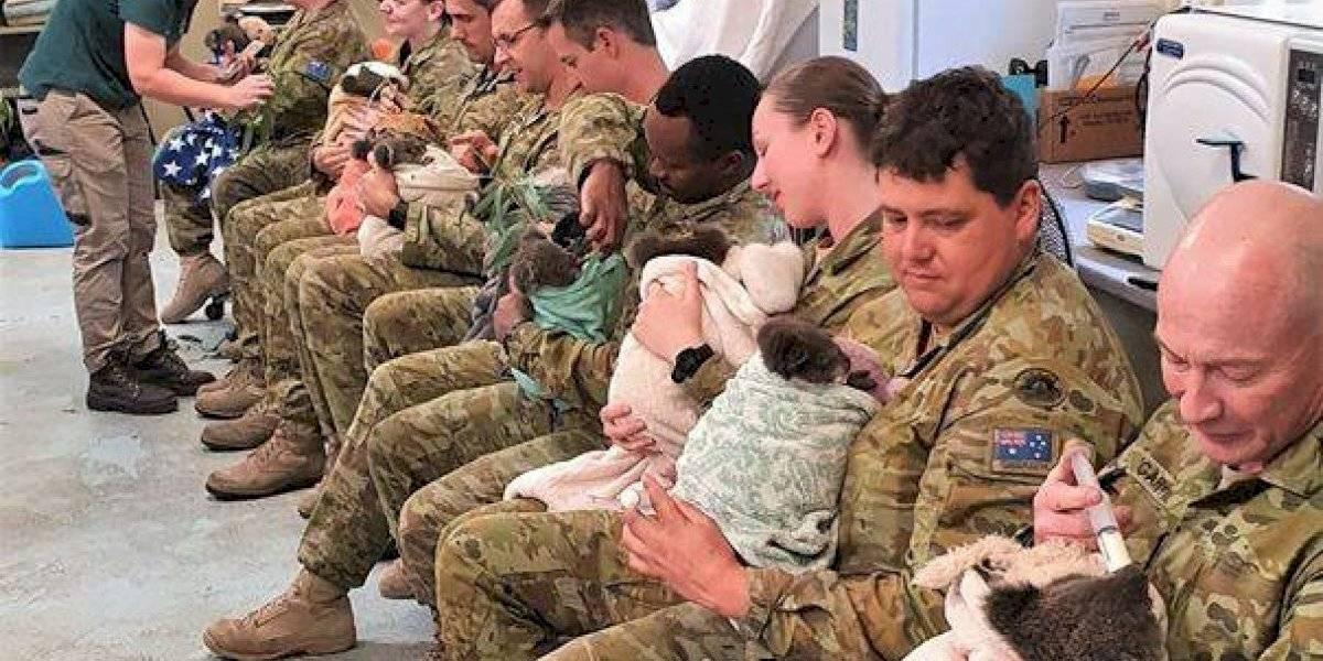 Entre imágenes de guerras, masacres y represión: soldados australianos marcan la diferencia y alimentan bebés koalas