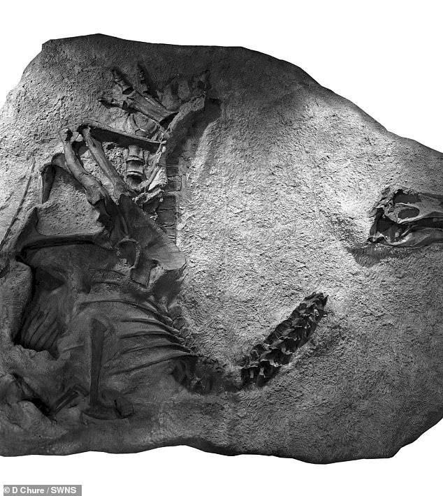 Dinosaurio: científicos han reconocido nueva especie que había sido encontrada hace 30 años