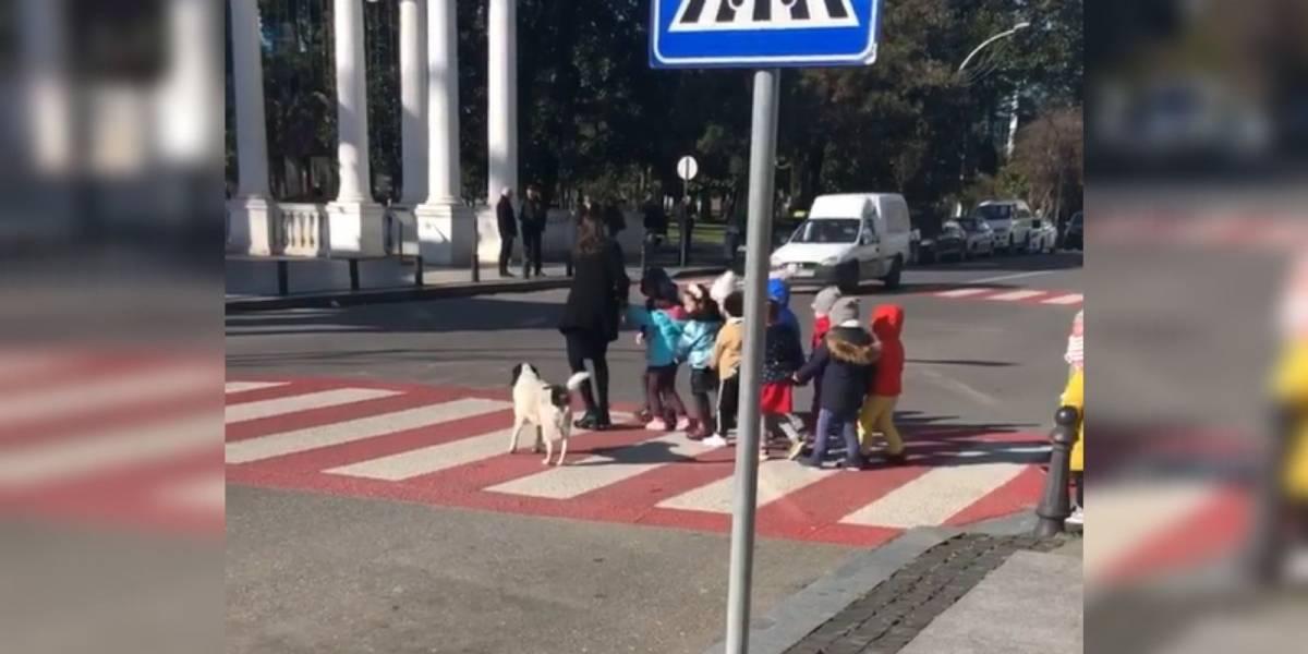 VÍDEO: Cão valente ajuda 18 crianças a atravessarem a rua