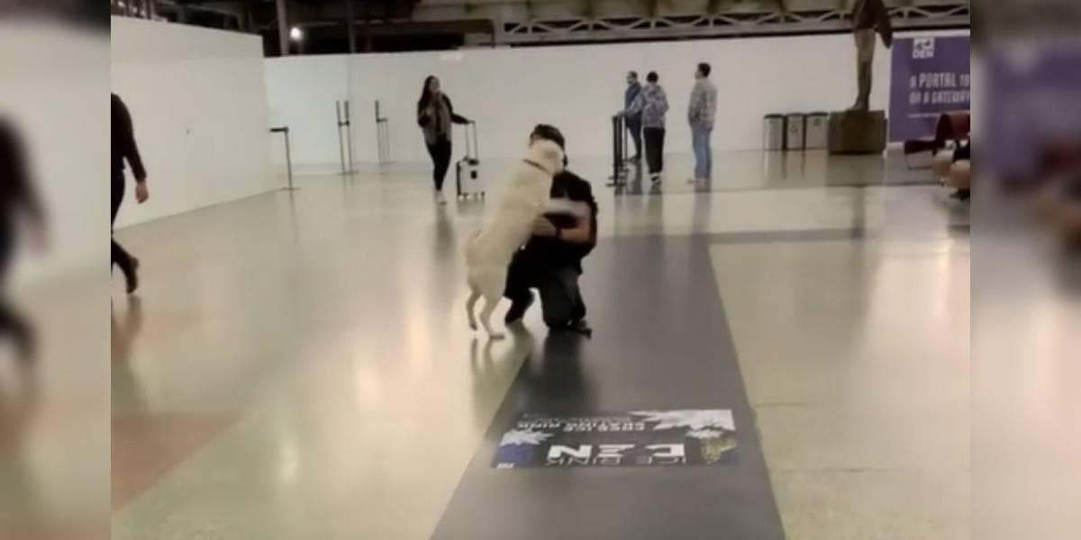 VÍDEO: Reencontro emocionante de cão com seu dono