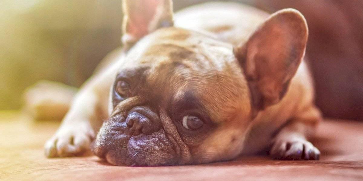 ¿El coronavirus afecta a las mascotas? Esto dice la OMS