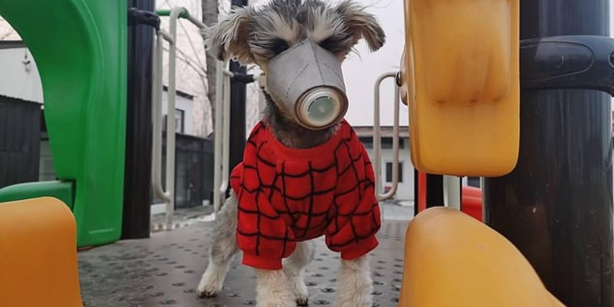 Fake News: Vacina para cachorro NÃO combate novo coronavírus