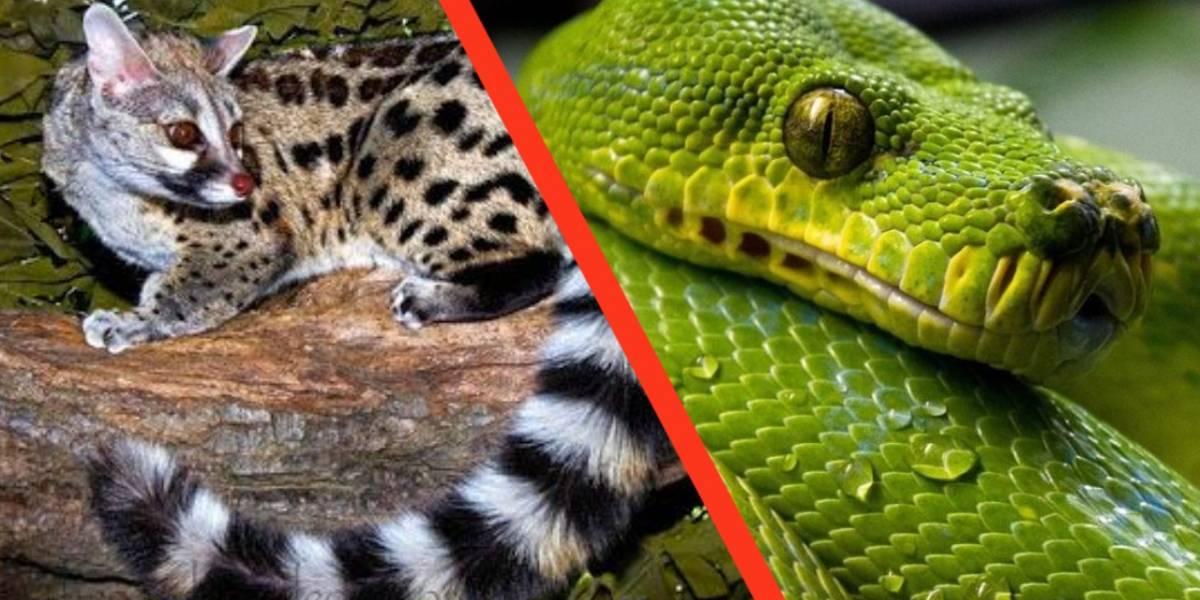 Estos son los animales sospechosos de haber contagiado el coronavirus a los humanos