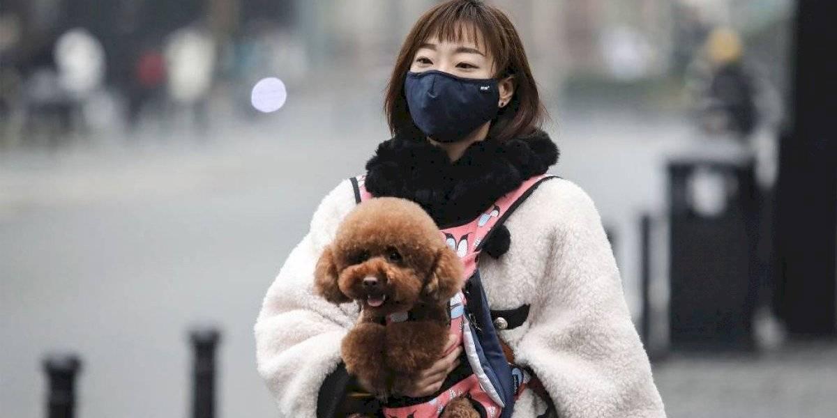 Afirman que China ordenó deshacerse de las mascotas por el coronavirus: registros muestran a personas tirándolas por los balcones