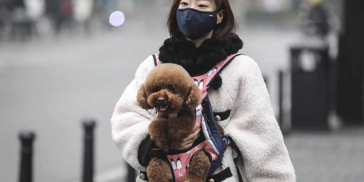 China ordena deshacerse de mascotas por Coronavirus