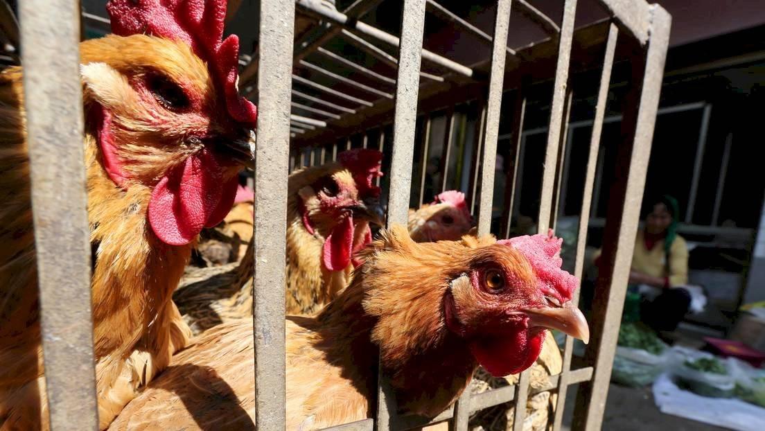 China anuncia brote de gripe aviar en zona cerca a Wuhan, foco de coronavirus