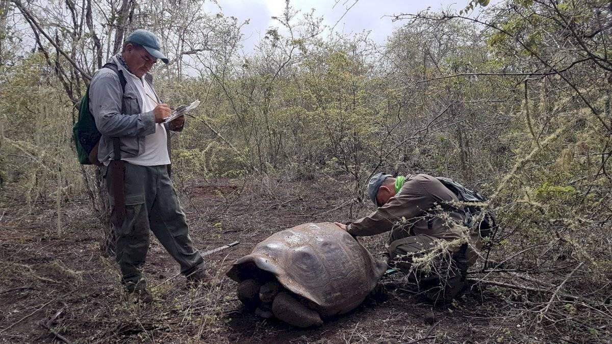 Hallan a tortuga pariente del Solitario George en Galápagos Parque Nacional Galápagos