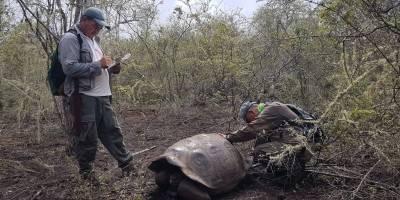 Hallan a tortuga pariente del Solitario George en Galápagos