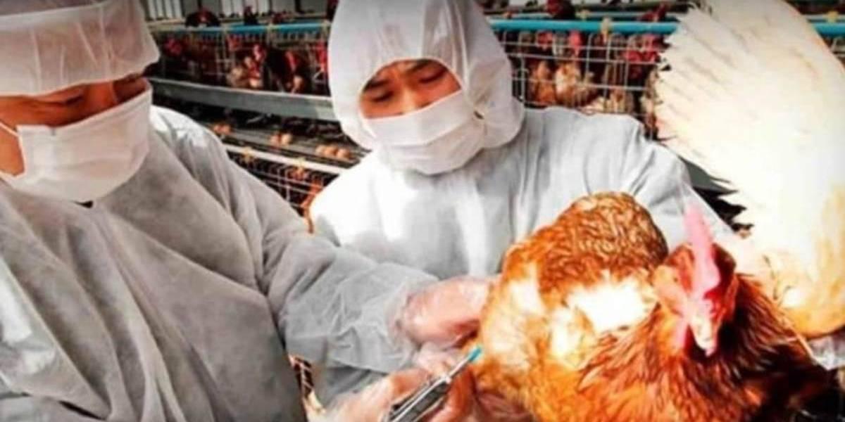 China registra brote de gripe aviar cerca de zona cero del coronavirus