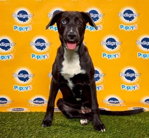 Foto Animal Planet | Puppy Bowl 2020