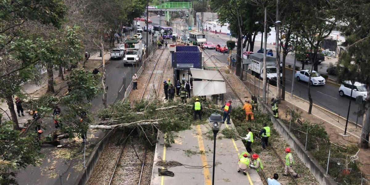 Vientos dejan 4 árboles caídos y una barda derrumbada
