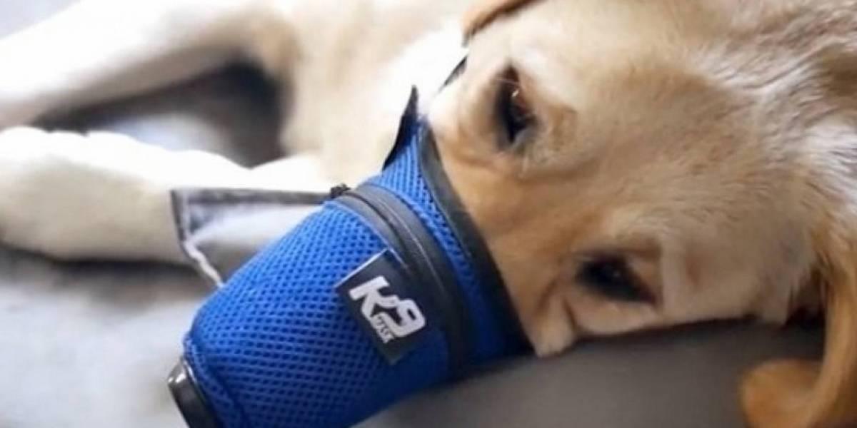 En China colocan mascarillas a los perros para protegerlos del coronavirus y las ventas se incrementan