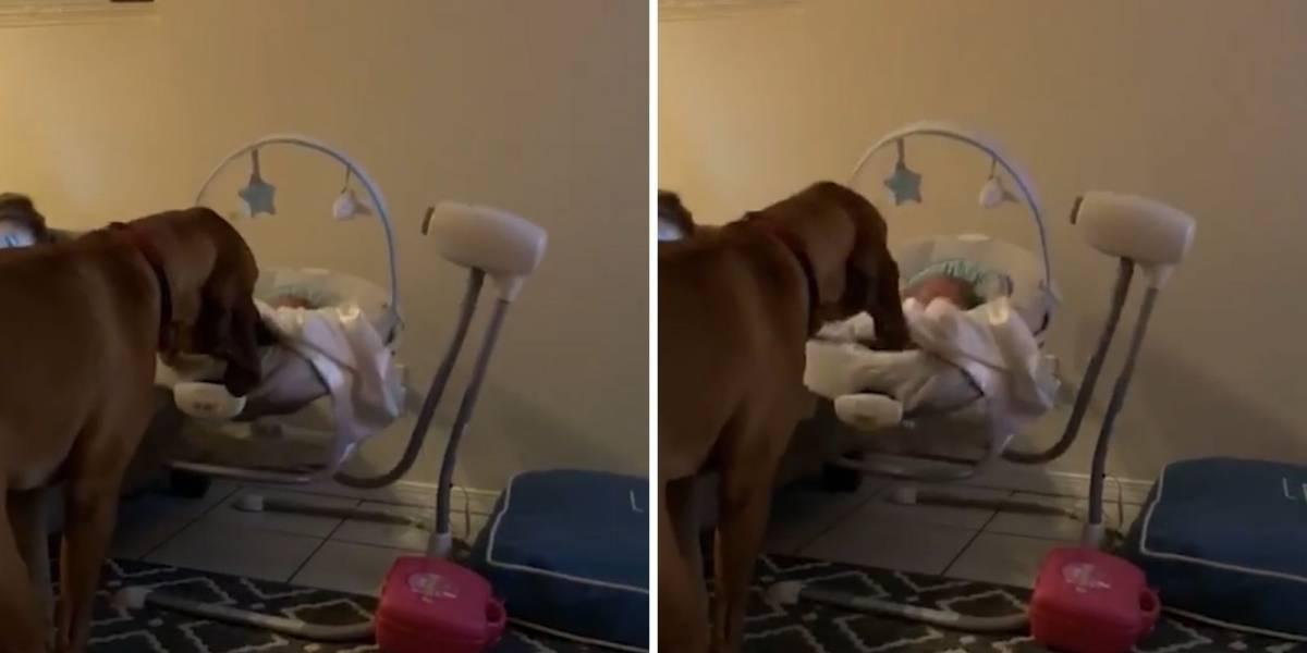 VÍDEO: Em gesto fofo, cachorro balança o berço de um bebê