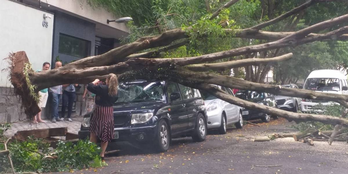 Árvore cai e atinge carro na Aclimação, zona sul de São Paulo