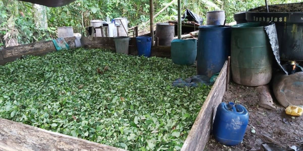 Localizan laboratorio con 15000 plantas de coca en Lago Agrio