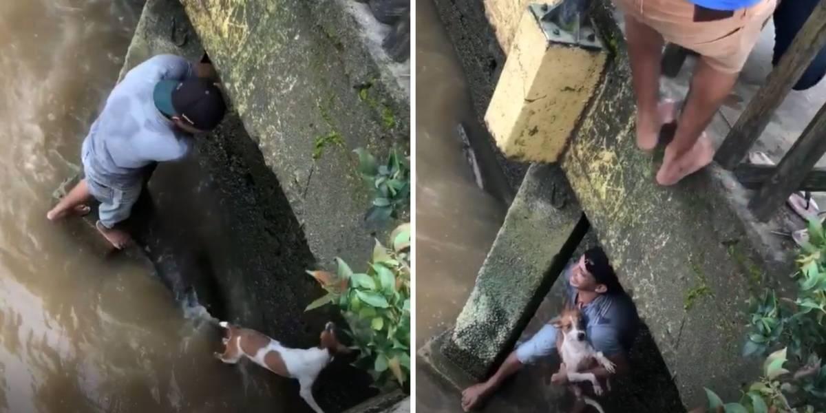 VÍDEO: Homem resgata cachorro de rio e evita tragédia
