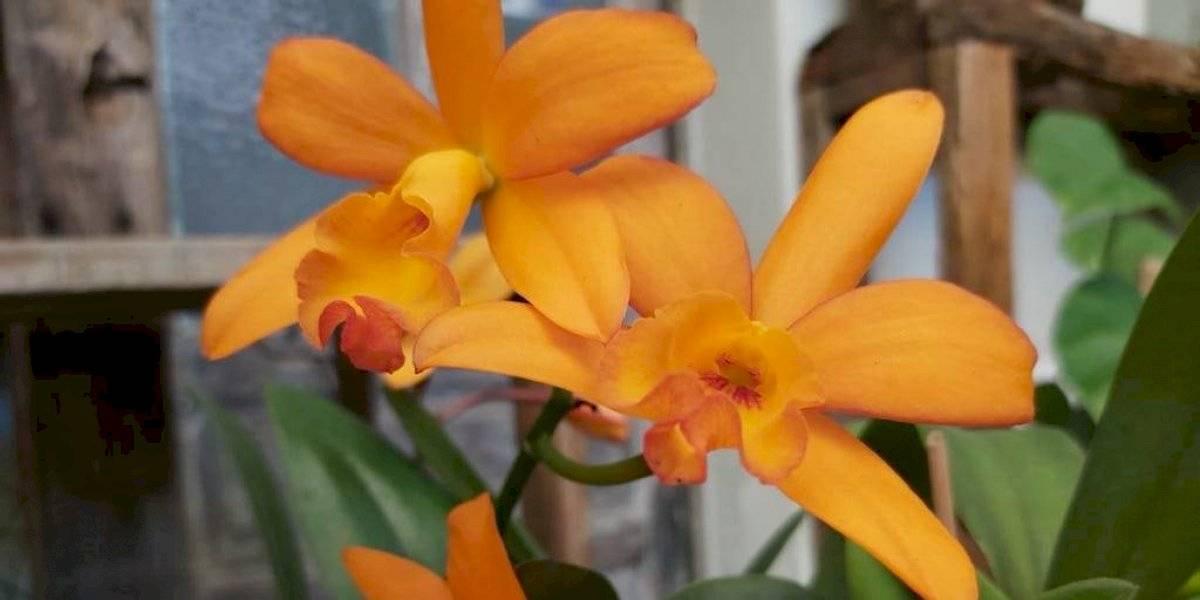 ¿Te gustan las orquídeas? En esta exposición podrás conocer más de mil 500 especies