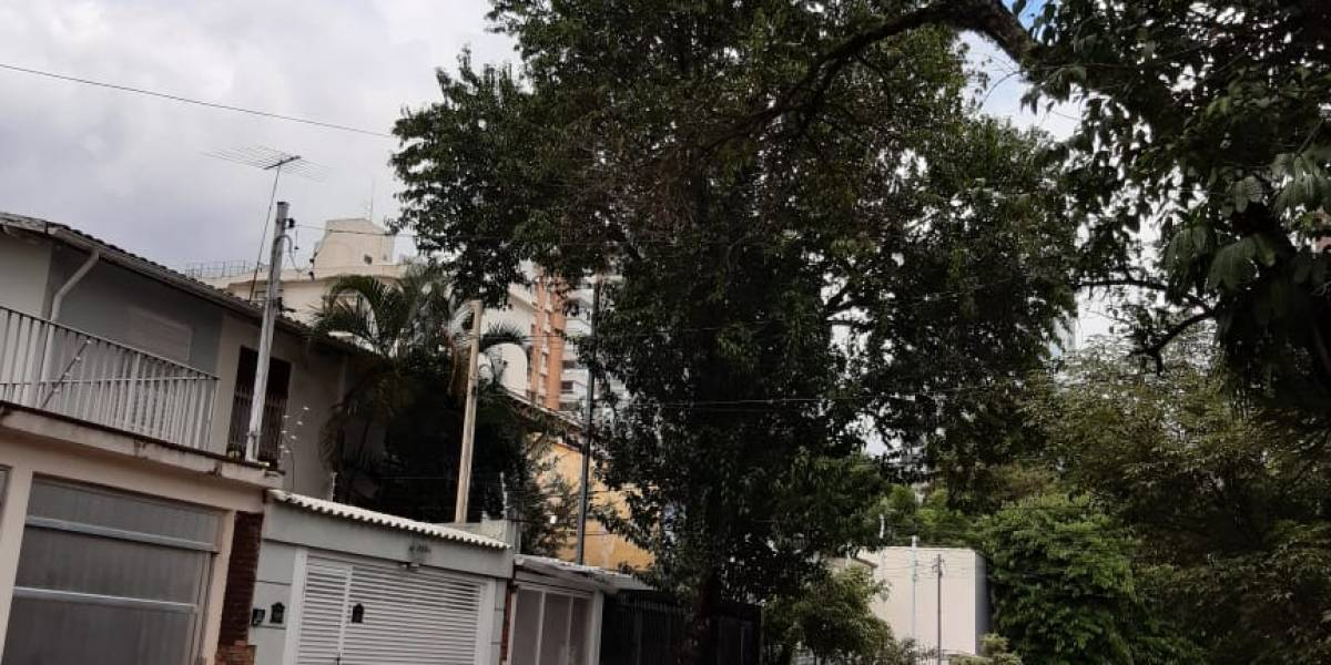 Árvores de grande porte em risco de queda preocupam moradores em São Paulo