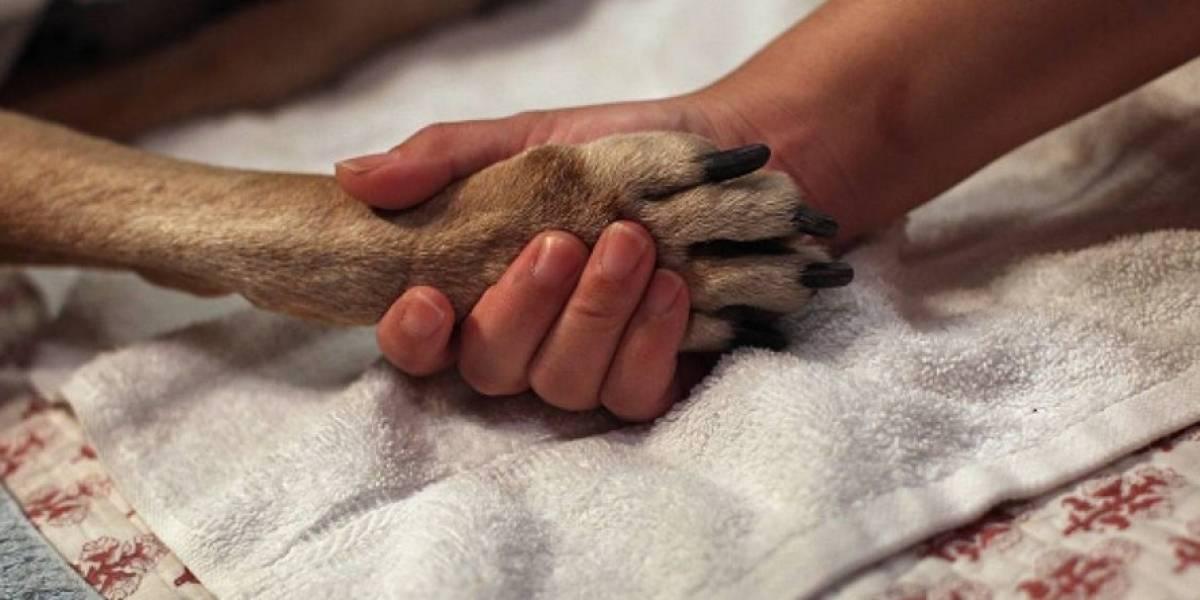 """""""Nadie me va a encarcelar por esto"""": pareja rusa adoptó a adorable perrito para matarlo a golpes y cocinarlo para la cena"""