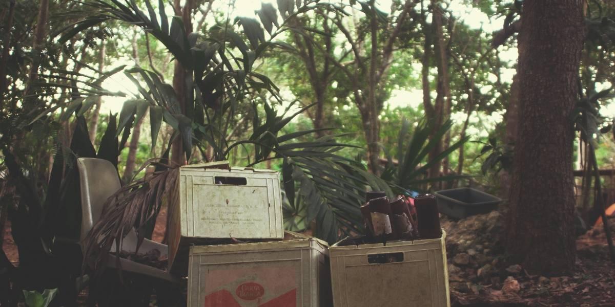 Sustentabilidade: transforme seu lixo orgânico em fertilizante para a terra