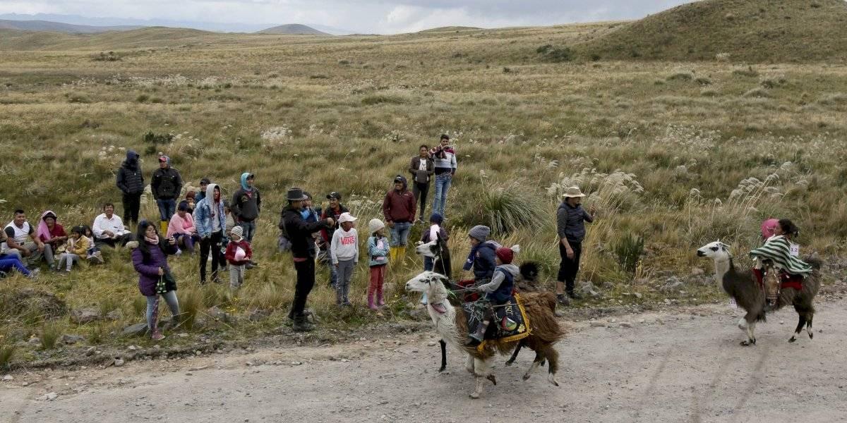 Ecuador: Una competencia de niños y llamas en los Andes