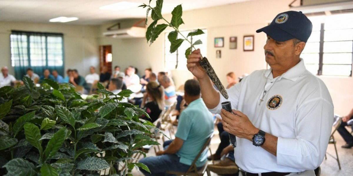 Departamento de Agricultura impulsa nueva técnica en siembra de café
