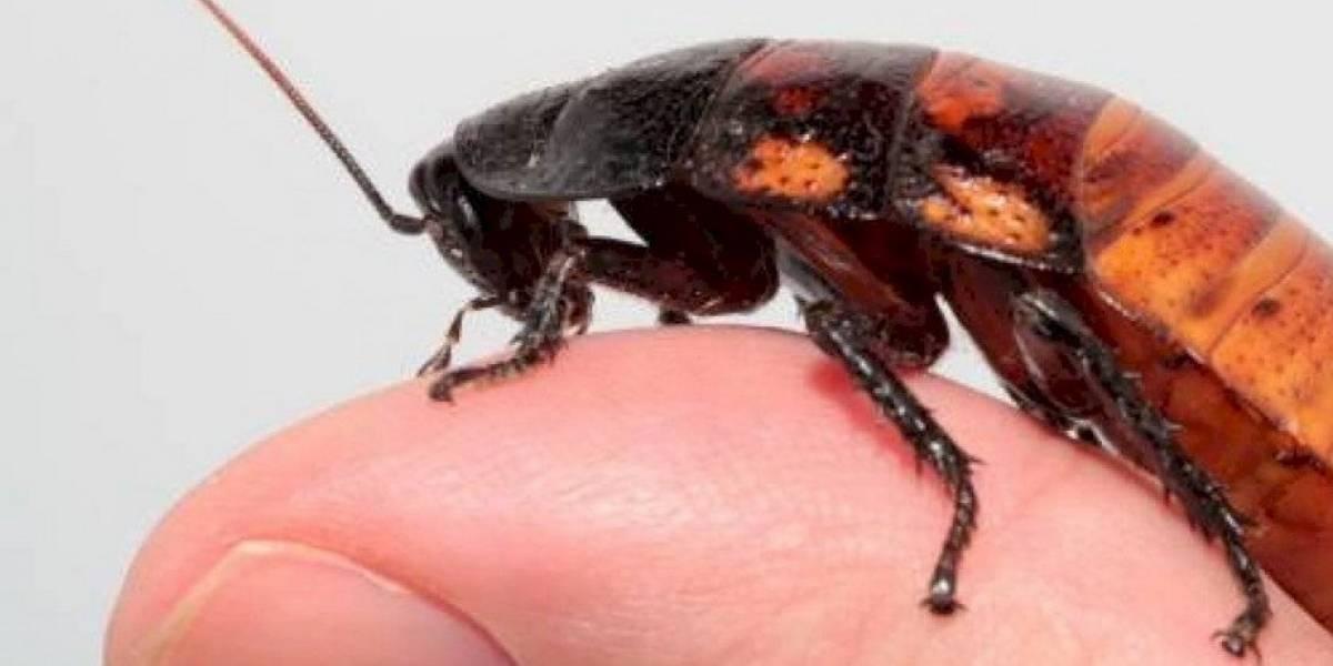 Convierte a tu ex en un almuerzo: Zoológico bautizará a cucarachas para alimentar a sus animales
