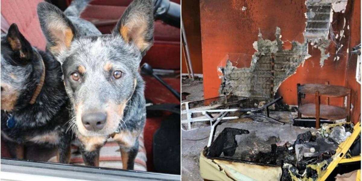 VÍDEO: Cachorros colocam fogo em casa e contemplam incêndio tranquilamente